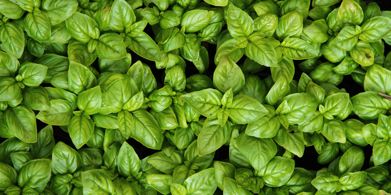backround-PRODUCTS.jpg